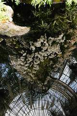 reflections (A Cromwell) Tags: nybg botanicalgardens garden orchid orchidshow orchidshow2019