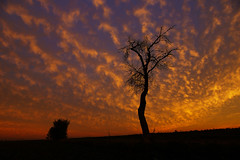 tree in flames (murtica27) Tags: sunset sunrise evening gold red sky landschaft landscape sachsen saxony sony alpha tree mood stimmung scenery nature