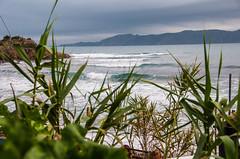 Pequenas olas (Basile Lucas) Tags: vegetation vages plages hawai llançà catalogne