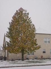 Snow on November 15 (brooklandsspeedway) Tags: pennsylvania