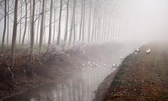 cicogne-e-ibis (claudiomantova1) Tags: natura alberi inverno autunno cicogne ibis paesaggio riflessi