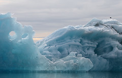 Berg Portal (peterkelly) Tags: digital iceland bestoficeland gadventures europe canon 6d jökulsárlónglacierlagoon boatride ice bergs berg hole blackbackedgull bird gull perched perch glacier glacial