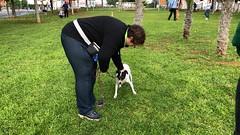 IMG_8615 (Doggy Puppins) Tags: educación canina adiestramiento canino perro dog