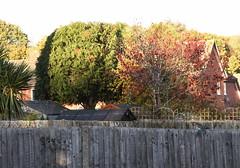 DSC_2247 (PeaTJay) Tags: nikond750 reading lowerearley berkshire gardens outdoors flora fauna plants flowers trees bushes