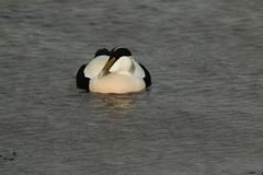 IMG_4919 (monika.carrie) Tags: monikacarrie wildlife scotland