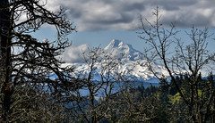 Mountain through the trees (maytag97) Tags: hoodriverarea maytag97 nikon d750 tree branch cloud oregon mount hood mt snow trees volcano view nature sunny blue sky white landscape forest scenic mountain recreation summer valley peak ski northwest beautiful beauty majestic travel outdoor outdoors clean scenery usa sunshine