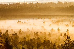 Misty Trees in the Morning (Digikuvaaja) Tags: finland nordiccountries background beautiful calm countryside dawn early fog foggy forest landscape light marsh mist misty morning nature nobody orange painterly peaceful scenery scenic season silhouette summer sunlight sunrise swamp tranquil trees water wetland wilderness tammela tavastiaproper fi