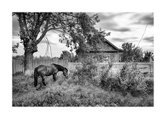 (Paphylo) Tags: countryside leicaq southwest monochrome dark reallife blackandwhite grain rural ukraine countrylife document village horse
