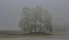 Winterlandschaft (olds.wolfram) Tags: baum winter natur kinzig birke weis