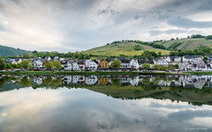 View from Zell (Moselle) (cedant1) Tags: moselle zell germany allemagne vallée valley goldenhour evening reflection water vineyards field landscape europe river houses