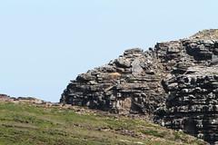 New Island in the Falklands (Bird Aficionado Stan) Tags: falklandislands falklands newisland