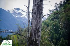 _DSC6512 (Rutas Patagónicas) Tags: patagonia rutaspatagónicas ruta 231 lago yelcho región de los lagos agenciaschaefer