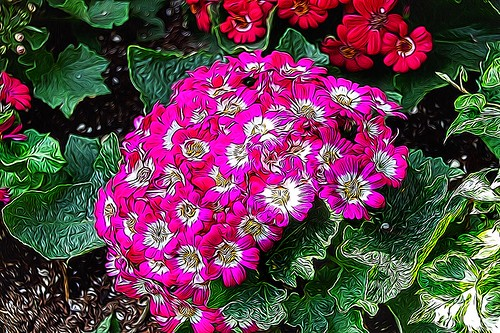 Allan Gardens Conservatory ~ Toronto Ont - Canada - Botanical Gardens - Cluster of  Rose hydrangea flowers blooming.