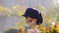 Hello - 6133 (ΨᗩSᗰIᘉᗴ HᗴᘉS +27 000 000 thx) Tags: skeleton squelette os bokeh hensyasmine namur belgium europa aaa namuroise look photo friends be wow yasminehens interest intersting eu fr greatphotographers lanamuroise