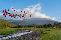 Mount Meru (u c c r o w) Tags: outdoor nature creek river mountain mount meru arusha national park africa tanzania flower red gree clouds sky landscape uccrow scene scenery beautiful flowers bougainvillea