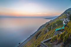 Sunset in Lavaux (fabienjammes) Tags: ifttt 500px sunset wine vineyard unesco lake long exposure romance vibrance vibe calm scenics scenery landscape switzerland swiss life lifestyle lavaux lausanne