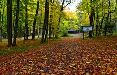 autumn colors (fotografia.KarolinaKwiatkowska) Tags: mazury masuria mazurycudnatury mazurymojamilosc masuren las lasmiejskigiżycko grajewo giżycko gizycko autumn autumncolors jesień jesiennie jesien poland polen polska