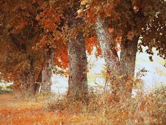 Colori d'autunno (Tilly Sfortunato) Tags: roccasecca ciociaria