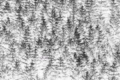 Pines in the snow (OzzRod (on the wallaby)) Tags: pentax k3 smcpentaxda55300mmf458 monochrome blackandwhite abstract pentaxart forest trees pine waitahuna newzealand