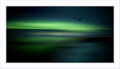 Freedom (Fr@nk ) Tags: sea northernlight bird sky himmel ciel nuages clouds mood art canon6d eos6d ef50mm panorama pano frnk mrtungsten62 rec0309 recent europ12 europe evening night light beauty beautiful freedom fantasy