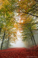 Colors of autumn (Mavroudakis Fotis) Tags: forest dreamscape autumn woods trees vivid foliage lush nature rays outdoors path road trunk colorful yellow greece europe destination traveling hikking mountain leaves