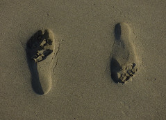 Not Knowing Which Way to Turn (Steve Taylor (Photography)) Tags: footprints brown sand beach newzealand nz southisland canterbury christchurch northnewbrighton seaside shape shadow impression autumn eresant