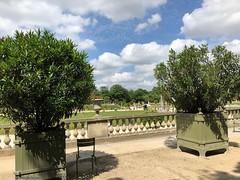 au-jardin-du-luxembourg-ciel (alexandrarougeron) Tags: photo alexandra rougeron paris ville paysage