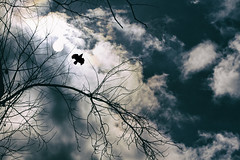 it's mine! (1crzqbn) Tags: bird sun blue light outside sunlight 48522018 nature clouds refractions trees
