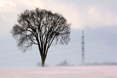 May the real King stand up ! (emerge13) Tags: lépiphaniequébeccanada snow trees landscape winterlandscape stormy winter pylons countryside rural lépiphaniequébec saariysqualitypictures winterscape winterbeauty projectwheather