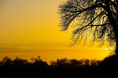 Polish landscape at dusk (elzbietafazel) Tags: tree sunset treesbranches autumn fall moody mysterious dimness yellowsky contrast landscape nature willow polishlandscape outlines pomerania