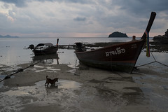 ko lipe, thailand (emiliano facchinelli) Tags: kolipe thailand dog longtailboat sunrise