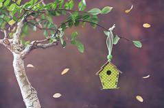 """ Bird house"" (mariajoseuriospastor) Tags: casita stilllife birdhouse"