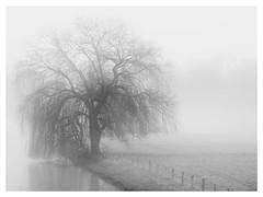 Schönheit !!! (Hier und Jetzt) Tags: trauerweide baum nebel verzaubert stille schwarzweis blackwhite graustufen germany trave