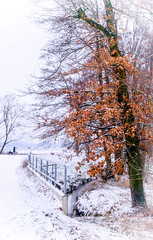 Eiche im Winter (Edi Gollasch) Tags: eiche winter schnee brücke hund natur mensch outside