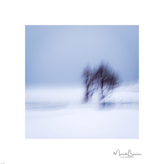Two Trees and a Gate.jpg (ICM & Me) Tags: winter icm intentionalcameramovement blur flou abstract abstrait lofoten norway graphic snow norge nordland landscape cold lofotenislands