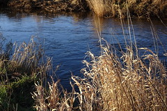 On a winters day (Steenjep) Tags: landskab landscape field mark himmel sky å stream røddingå timring møltrup vand water