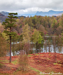 Tarn Hows and the Langdale Pikes (Dave Snowdon (Wipeout Dave)) Tags: davidsnowdonphotography canoneos1100d landscape lakedistrict lakedistrictnationalpark tarnhows langdale cumbria englishlakes lakeland trees spring