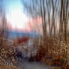 AUBE SUR VAR (zventure,) Tags: zventure alpesmaritimes aube arbres couleurs cailloux buissons brindilles branches brisées feuilles feuillage chemin carré caché campagne sable