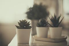 Hello Spring (Graella) Tags: verde green spring primavera plantas suculentas succulents cactus macetas stilllife seasonsmydiary seasons 52semanas home