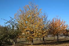 Autumn walk 2018 ### Herbstspaziergang 2018 (Mc Steff) Tags: autumn walk autumnwalk herbstspaziergang 2018 baum tree trees herbst blatt blätter laub leaf leaves foliage bäume