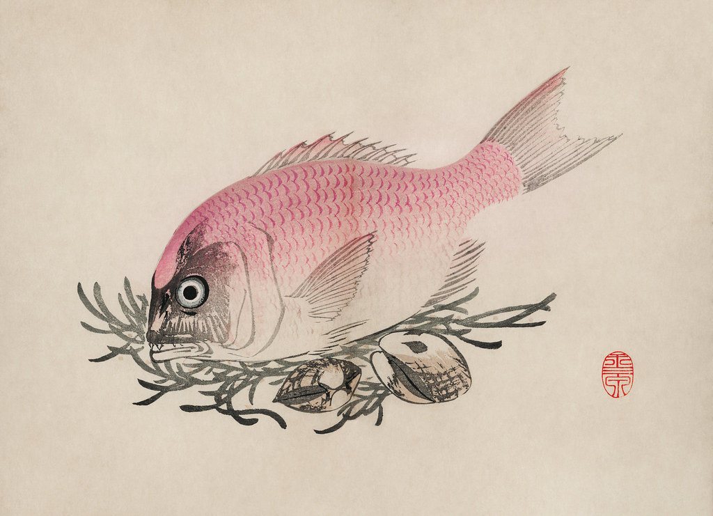 The ukiyo-e illustration of fish and clams by Mochizuki Gyokusen, drawn in the year 1891. Digitally enhanced from our own original wood block print.