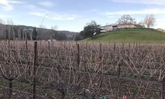 #WineTasting with #Friends (Σταύρος) Tags: grapevines fairfield windy cold merrychristmas happyholidays fall vineyard winery houseonthehill ontopofthehill winetasting friends kalifornien californië kalifornia καλιφόρνια カリフォルニア州 캘리포니아 주 cali californie california northerncalifornia カリフォルニア 加州 калифорния แคลิฟอร์เนีย norcal كاليفورنيا