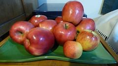 Apple time (Sandy Austin) Tags: panasoniclumixdmcfz70 sandyaustin massey westauckland auckland northisland newzealand apple fruit