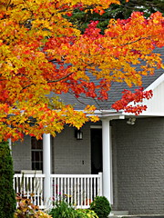 Natural entry decorations (clickclique) Tags: tree fall entrance railing post house red orange yellow white green posts inexplore