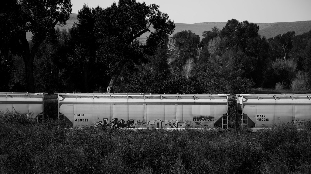 3e2d5f4fe82 They Misspelled Comfort (The Good Brat) Tags: colorado us train  blackandwhite graffiti misspelled