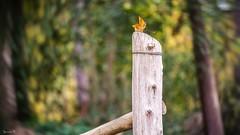 Fence - 6151 (ΨᗩSᗰIᘉᗴ HᗴᘉS +27 000 000 thx) Tags: fence fences happyfencefriday hff nature wood forest fuji fujifilmgfx50s fujifilm hensyasmine namur belgium europa aaa namuroise look photo friends be wow yasminehens interest intersting eu fr greatphotographers lanamuroise