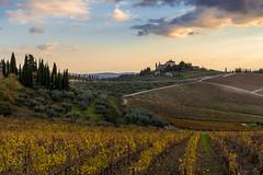 Vigneti nel Chianti (mire_52) Tags: vigneti olivi stradine bianche colline chianti castello cipressi crepuscolo