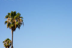 Tree tops (.Stephen..Brennan.) Tags: da70 eastfremantle pentax pentaxk3 trees perth westernaustralia australia au 70mm