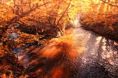Geul en Kleine Geul, Meersen (NL) (Trampelman) Tags: trampelman type116 leicaq autumn herfst herbst strijklicht limburg nl nederland netherlands water rivier bruin