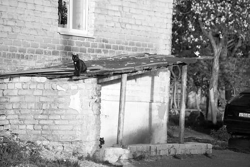 Black cat ©  Andrey